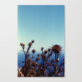 Sun-Bleached Blossom Canvas Print