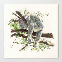 koala Canvas Prints featuring Koala by Patrizia Donaera ILLUSTRATION