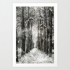 Infrared and symmetry Art Print