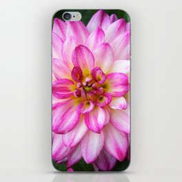 Pink and White Dahlia iPhone Skin