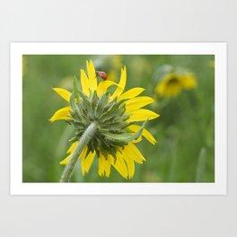Ladybug climbing wildflower Art Print