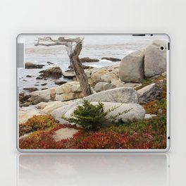 Dead Cypress At Pebble Beach Laptop & iPad Skin