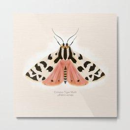 Crimson Tiger Moth Metal Print