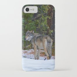 Wolf in Jasper National Park iPhone Case
