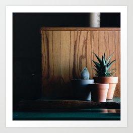 Succulent Shadows Art Print