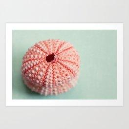 sea urchins series no 1 Art Print