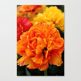 Open Tulip Canvas Print