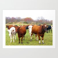 cows Art Prints featuring Cows by AstridJN