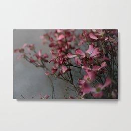 pink dogwood #4 Metal Print