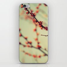 When spring was autumn... iPhone & iPod Skin