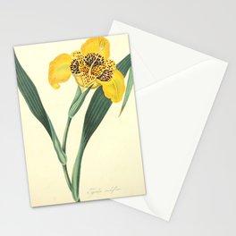 Roscoe, Margaret, 1786, 1840, Floral, Illustrations, of, the, Seasons, 1831, Delphinium, Grandifloru Stationery Cards