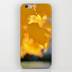 Autumn Gold iPhone & iPod Skin