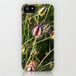 LOVE in a Mist - NIGELLA damascena iPhone Case