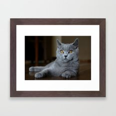 Diesel the cat 1 Framed Art Print