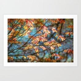 Autumn Colourburst  Art Print