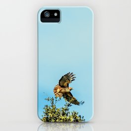 Bird - Red-Tailed Hawk - Study 2 iPhone Case