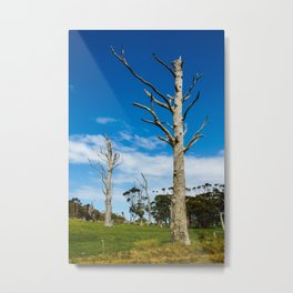 Lifeless Gum trees Metal Print