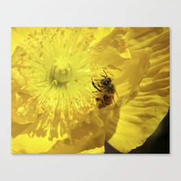 Bee in Yellow Poppy 1 Canvas Print