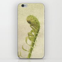 fern iPhone & iPod Skins featuring Fern by Pure Nature Photos