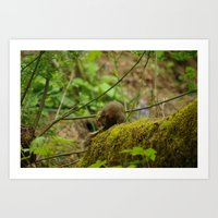 Checking Squirrely Bits Art Print