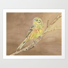 Yellowhammer on Brown Art Print