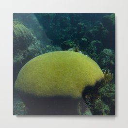 Giant Brain Coral Metal Print