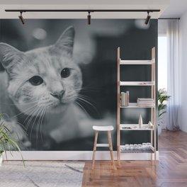 Cat by Erik Mclean Wall Mural