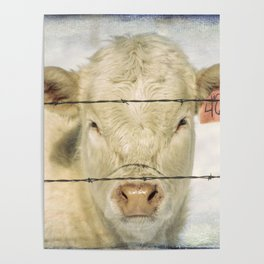 Moo Are So Beautiful Poster