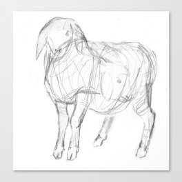 Sketch of a Lamb Canvas Print