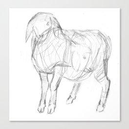 Sketch of a Lamb Canvas Print