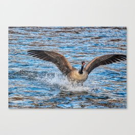 Landing In The River Canvas Print