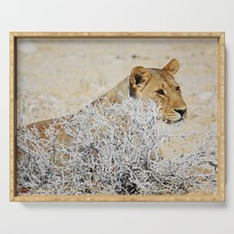 NAMIBIA ... The Lioness II Serving Tray
