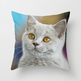 Young British Shorthair cat Throw Pillow