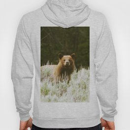 Bush Bear Hoody