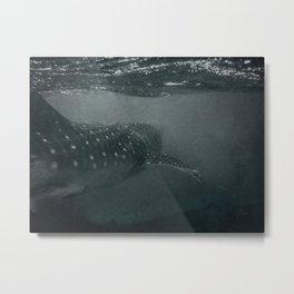 Whaleshark Metal Print