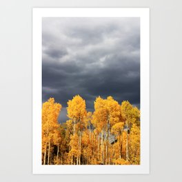 Golden Aspens and an Impending Storm Art Print
