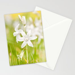 White Ornithogalum nutans pretty bloom Stationery Cards