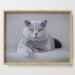 British shorthair cat Serving Tray
