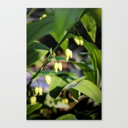 Solomon Seal Hidden Flowers, Botanical Fine Art Print, Nature Art Canvas Print