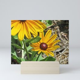Black-eyed Susans and a Busy Bee Mini Art Print