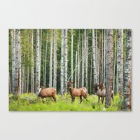 elk Canvas Prints featuring Elk by Andrea Gingerich