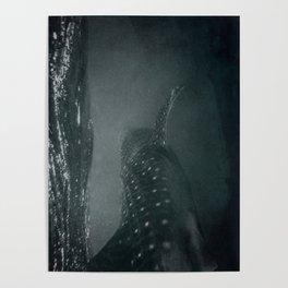 Whaleshark Poster