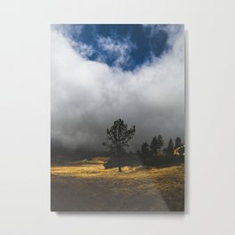 Meadow Glow Metal Print