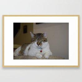 Patch Cat Framed Art Print