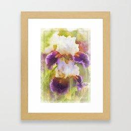 Painterly Bearded Iris Framed Art Print