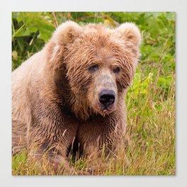 Brown Bear Kodiak Canvas Print