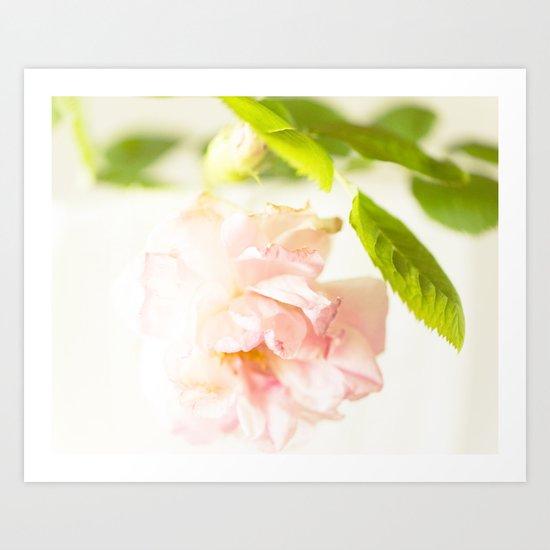 Romantic Soft Pink Rose Art Print