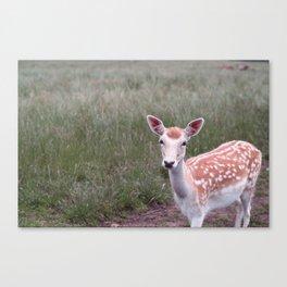 Sika Deer Canvas Print