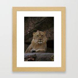 Lion! Framed Art Print