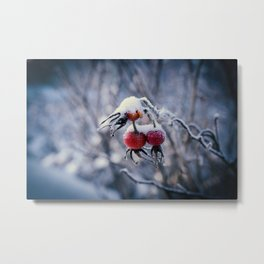 Rose hips and snow Metal Print
